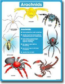 Arachnids Chart CD6383