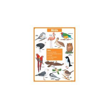Birds Chart CD6388