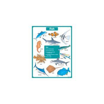Fish Chart CD6389
